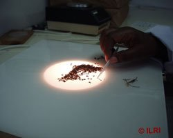 Separating_seeds_on_a_flat_lit_surface.jpg